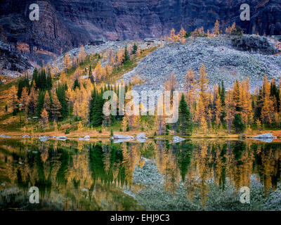 Lake reflection larch in fall color at Moor Lake and mountains. Yoho National Park, Opabin Plateau, British Columbia, - Stock Photo