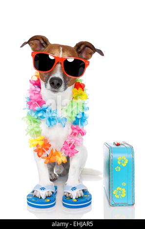 tourist dog with hawaiian  lei and a bag - Stock Photo