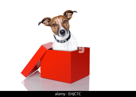 dog in a box - Stock Photo