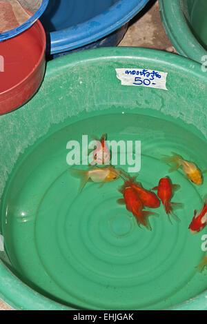 Goldfishes - Stock Photo