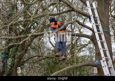 Bristol, UK. 14th Mar, 2015. A protester who is lowered by rope from a tree-top platform before being evicted from - Stock Photo