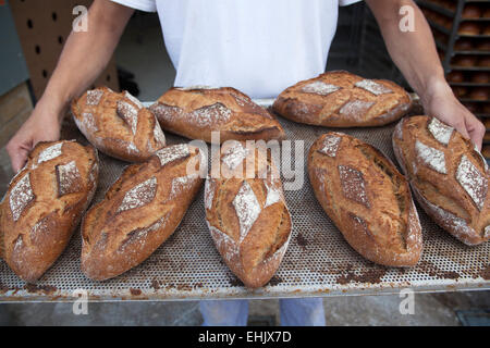 Baker holding a tray of loaves of freshly baked wholemeal bread - Stock Photo
