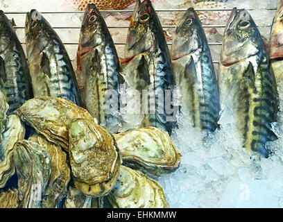 Assortment of oysters and raw mackerels on ice at the market stall - Stock Photo