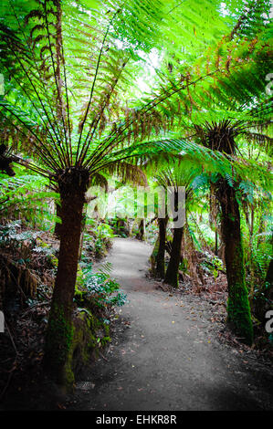 Maits Rest Rainforest Trail in Great Otway National Park, on Great Ocean Road, Victoria State, Australia - Stock Photo