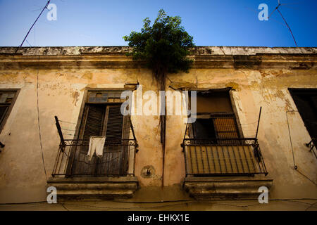 Decaying old building with tree growing out of it, Havana, Cuba - Stock Photo