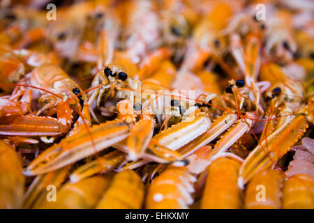 Langoustines in market, England, close up - Stock Photo