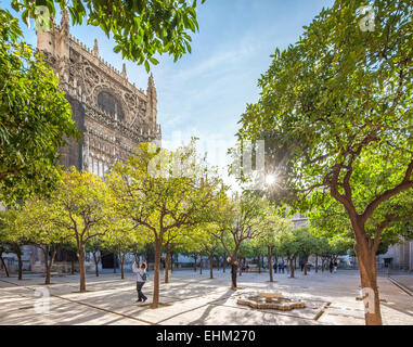 Seville Cathedral patio courtyard with orange trees with oranges and tourists taking pictures. Sevilla Catedral - Stock Photo