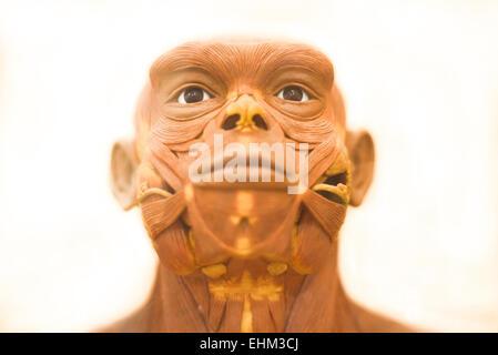 Bandung, Indonesia. 15th Mar, 2015. Details of life-sized reconstruction of Homo erectus by Yoichi Yazawa at Geology - Stock Photo