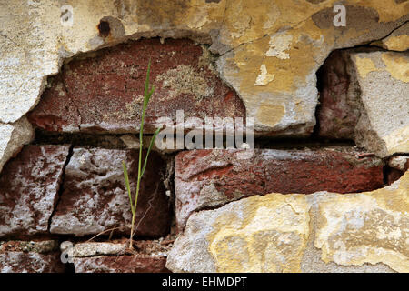 Old brick wall with cracked plaster. - Stock Photo