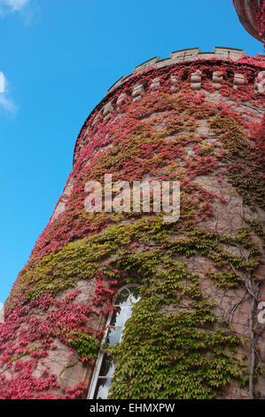Virginia creeper, Parthenocissus quinquefolia,Dalhousie Castle, Scotland - Stock Photo