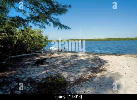 Cat on Pine Island island, with yacht in backround Indian River, Intracoastal Waterway, Florida, east coast US - Stock Photo