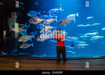 Baby boy watching fishes in an aquarium. - Stock Photo