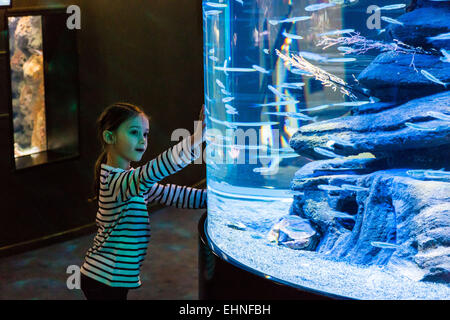 7 year-old girl watching fishes in an aquarium. - Stock Photo
