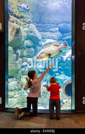 Children watching fishes in an aquarium. - Stock Photo