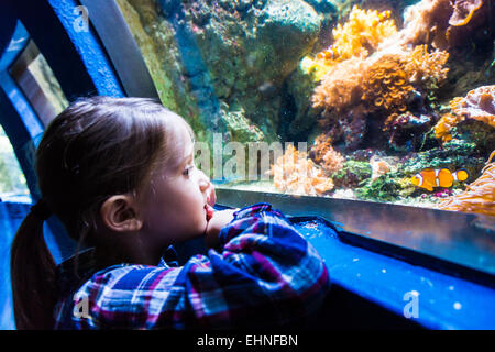 5 year-old girl watching fishes in an aquarium. - Stock Photo