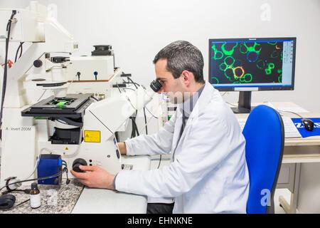 Analyses cellulaires en microscopie confocale, Equipe de recherche (ici post-doctorant) du laboratoire Contrôle - Stock Photo