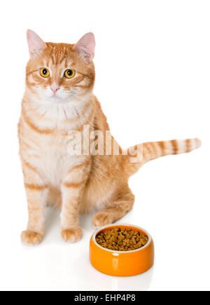 Red cat sitting near the bowl of dry food - Stock Photo