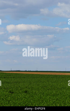 green wheat field under the blue cloudy sky - Stock Photo