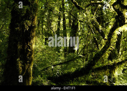 Astonishing view of tall trees covered in moss illuminated by rays of sun - Stock Photo