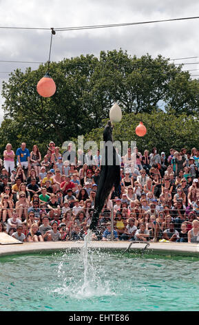 Sea lion jumping out of the water in front of a packed crowd in ZSL Whipsnade Zoo, Whipsnade, near Dunstable, England. - Stock Photo