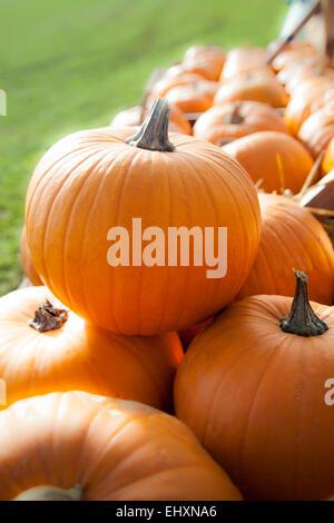 Pumpkins (Cucurbita) on sale for Halloween, Bavaria, Germany - Stock Photo