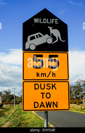 Wildlife warning road sign alongside highway in Australia. Drivers are urged to be cautious since kangaroos cause - Stock Photo