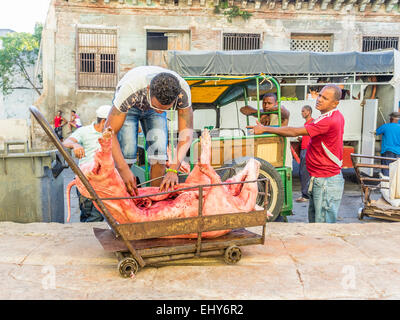 A butchered whole pig is being delivered to a market and a man is loading it on a cart to move it. - Stock Photo