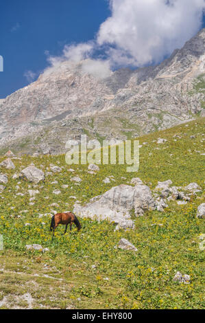 Horse grazing in scenic mountain range in Kyrgyzstan - Stock Photo
