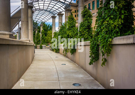 Foliage hanging along a walkway at Pack Square Park in Asheville, North Carolina. - Stock Photo