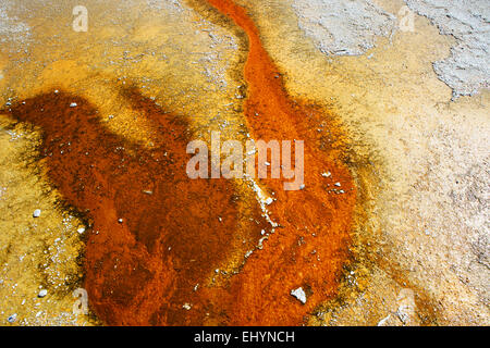 Bacterial mat, Grand Prismatic Spring, Yellowstone National Park, Wyoming, United States