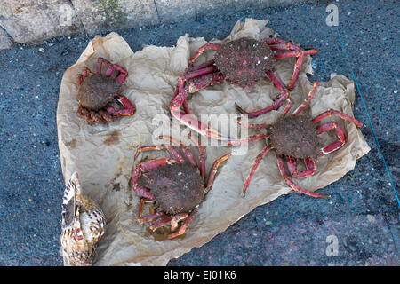 Spider crabs, fish market,  in the harbour at Essaouira, Morocco, North Africa - Stock Photo