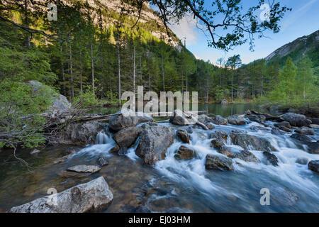Primeval forest, forest, Derborence, Switzerland, Europe, canton, Valais, mountain lake, lake, lake run-off - Stock Photo