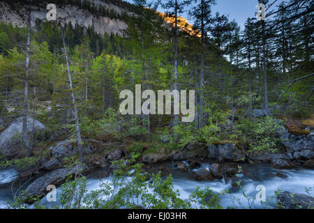 Primeval forest, forest, Derborence, Switzerland, Europe, canton, Valais, brook - Stock Photo