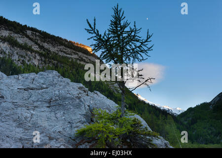 Primeval forest, forest, Derborence, Switzerland, Europe, canton, Valais, rock, cliff, larch, evening light - Stock Photo