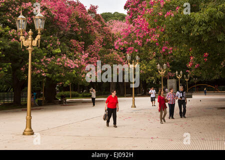 Argentina, Buenos Aires, Retiro, Plaza General San Martin, square lined with Silk Floss Tree, Ceiba Speciosa, Chorisia - Stock Photo
