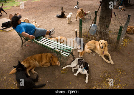 Argentina, Buenos Aires, Retiro, Plaza General San Martin, dog walker and dogs resting in park - Stock Photo