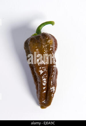 Re. The Clifton Chilli Club from Bristol meeting at the Dovercourt Allotments - A Chocolate Hablokia. - Stock Photo