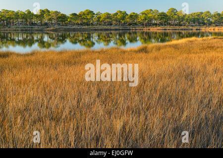 USA, Florida, Franklin County, Gulf of Mexico, Apalachicola, St. George Island, State Park, coastal grassland - Stock Photo