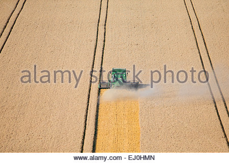 Combine harvester, harvesting wheat in rural field - Stock Photo