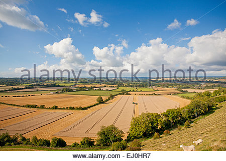 Rural landscape with Combine harvester, harvesting wheat - Stock Photo