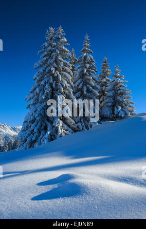 Tree, trees, spruce, spruces, Flumserberge, Flums mountain, mountains, Heidiland, sky, snow, Switzerland, Europe, - Stock Photo