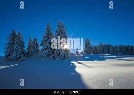 Tree, trees, spruce, spruces, Flumserberge, Flums mountain, mountains, back light, Heidiland, sky, snow, Switzerland, - Stock Photo
