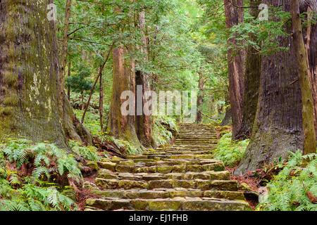 Kumano Kodo at Daimon-zaka, a sacred trail designated as a UNESCO World Heritage site in Nachi, Wakayama, Japan. - Stock Photo