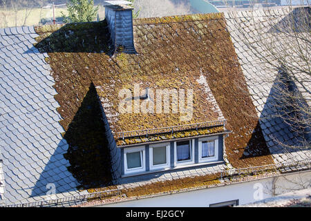 Lichens On Old Roof Tiles York Yorkshire Uk Stock Photo