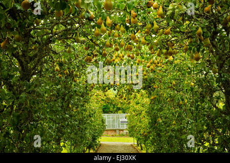 Pear arbor and path in the Gardens at the Dromoland Castle, Ireland - Stock Photo