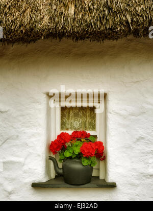 Begonia flower in pot and window and thatched roof. Bunratty Castle, ireland - Stock Photo