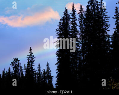 Rainbow over trees. Banff National Park, Canada - Stock Photo
