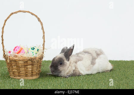 Easter rabbit with basket of eggs on grass - Stock Photo