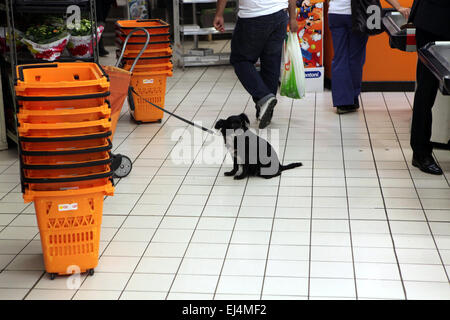 Black dog waits for its owner in a supermarket in Rome, Italy. - Stock Photo