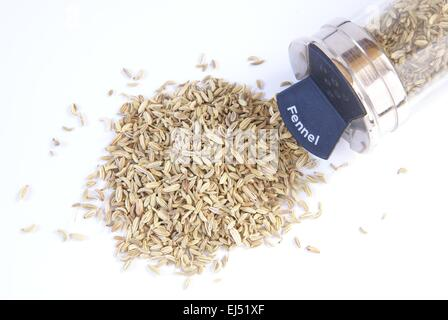 Dried fennel seed for cooking is photographed on a plain white background. A tipped over glass kitchen spice jar - Stock Photo